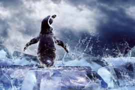 Fotobehang Pinguïn