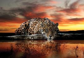 Fotobehang Luipaard bij zonsondergang