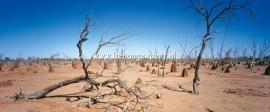 Fotobehang AP Digital 470060 Outback
