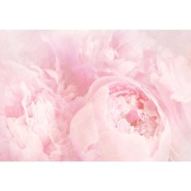 Fotobehang Bloemen Vintage Roze