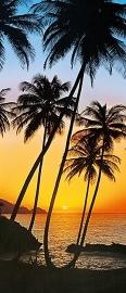 Fotobehang Idealdecor 00529 Sunny Palms
