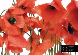 Fotobehang AG Design FTS0479 Wild Poppies