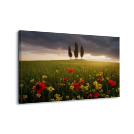 Canvasdoek Bloemen in de wei