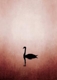 Fotowand Swan lake by Kubistika afm. 200cm x 280cm hoog