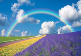 Fotobehang Bloemenveld met regenboog