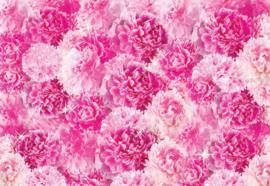 Fotobehang Mooie roze bloemen