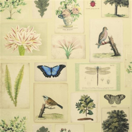 John Derian for Designers Guild PJD6001/01 Flora and Fauna