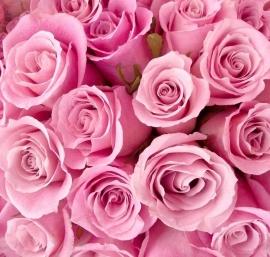 Dutch DigiWalls fotobehang art. 70079 Roze rozen