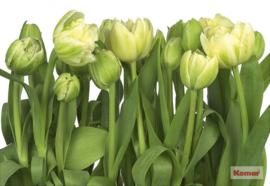 Komar 'Beauties' 8-900 Tulips