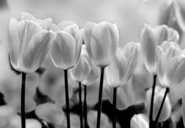 Fotobehang Black And White Tulips