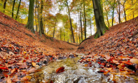 Fotobehang Holland 6604 - Bosbeek herfst
