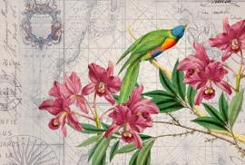 Fotowand Bird discovery 1 by Andrea Haase afm. 400cm x 270cm hoog