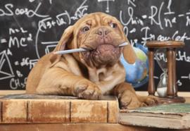 Fotobehang Puppy Professor