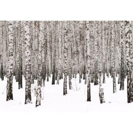 Fotobehang Birch Noir