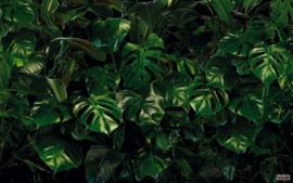 Komar Tropical Wall P333-VD4