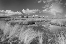 Fotobehang Holland 0693 - Veluwe