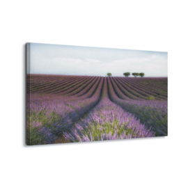 Canvasdoek Velours de Lavender by Margarita Chernilova
