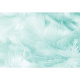 Fotobehang Dwarrelende Veren Turquoise
