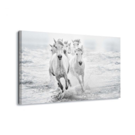 Canvasdoek Paarden in galop door de zee