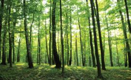 Fotobehang Bos met Groene Bomen