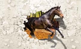 Fotobehang Paard door muur
