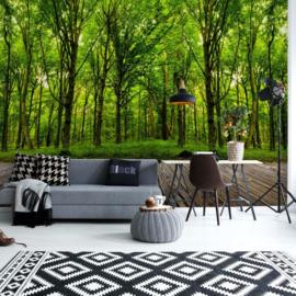 Fotobehang Step into the deep green Wood