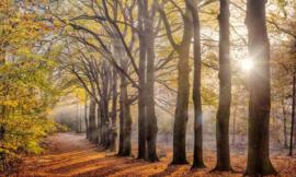 Fotobehang Holland 2144 - Beukenlaantje herfst