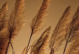 Fotobehang Pampas Grasses