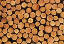 Fotobehang Wood Logs