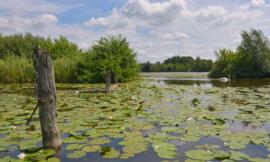 Fotobehang Holland 4624 - Loosdrecht   