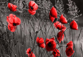 Fotobehang Red Poppies Black And White