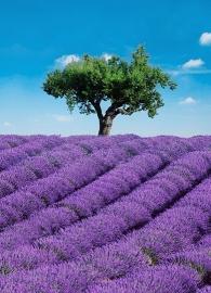Fotobehang Idealdecor 00309 Provence