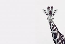Fotowand Giraffe Portrait by Monica Strigel afm. 400cm x 270cm hoog