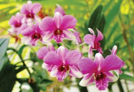 Fotobehang Pink Orchids