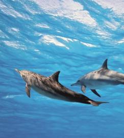 Fotobehang Dolfijnen