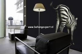 Fotobehang AP Digital 470039 Zebra