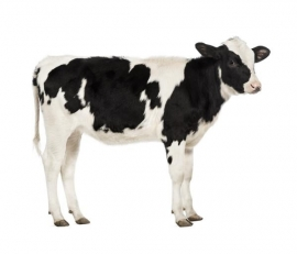 Fotobehang Noordwand Farm life 3750042 Cow
