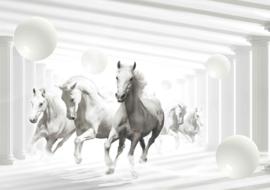Fotobehang Witte paarden