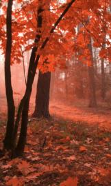 Fotobehang Mistig bos