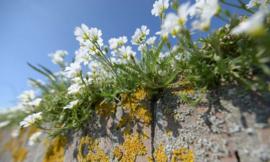 Fotobehang Holland 5090 - Muurbloemen
