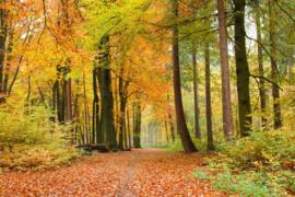 Fotobehang Herfst bos