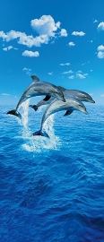 Fotobehang Idealdecor 00599 Three Dolphins
