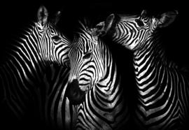 Fotobehang Black And White Zebras