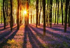 Fotobehang Idealdecor 00952 Woodland at Dawn