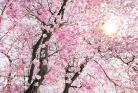 Komar XXL4-046 Bloom