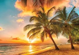 Fotobehang Strand en Palmbomen