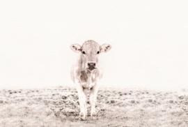 Fotowand Highland cattle 3 by Monica Strigel afm. 400cm x 270cm hoog