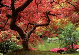 Fotobehang Autumn Flower Forest