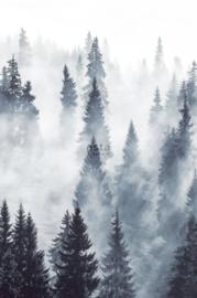 Esta photowallXL 158909 foggy Forest