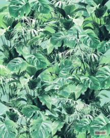Komar Evergreen P023-VD2